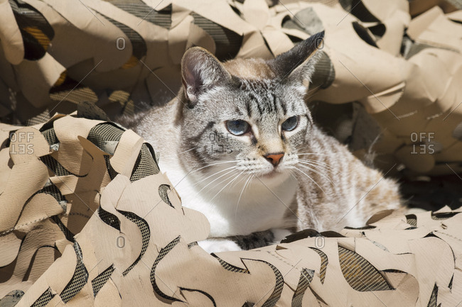 Cat in Camouflage - Offset Collection