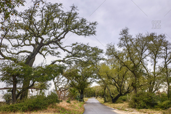 Gulf of Mexico, Ocean Spring, Mississippi. Long country road framed by gnarly mature Oak Trees