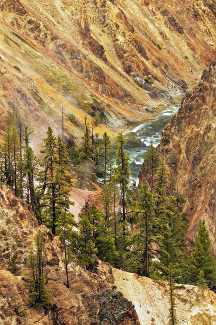 Trees and colorful patterns on canyon walls, Grand Canyon of Yellowstone, Yellowstone National Park (Montana, Wyoming)