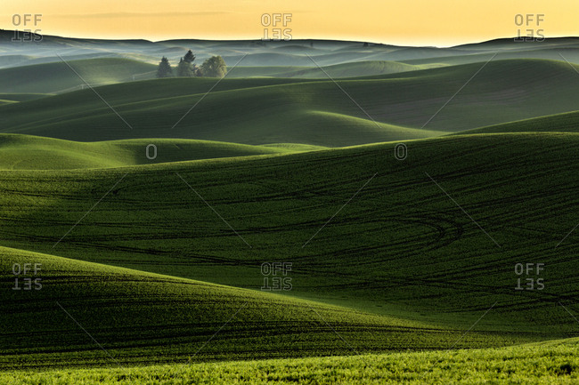 Rolling hills covered in wheat at sunset, Palouse region of eastern Washington State.
