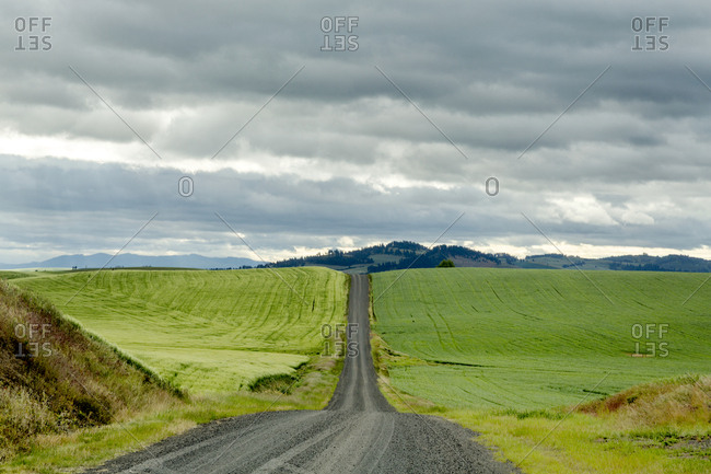 Expansive lonely road across rural rolling hills of the Palouse region of eastern Washington State.