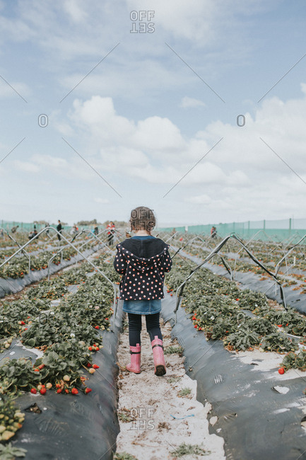 Young girl walking through strawberry patch