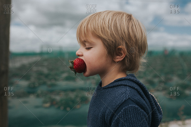 Toddler boy with a huge strawberry in his mouth