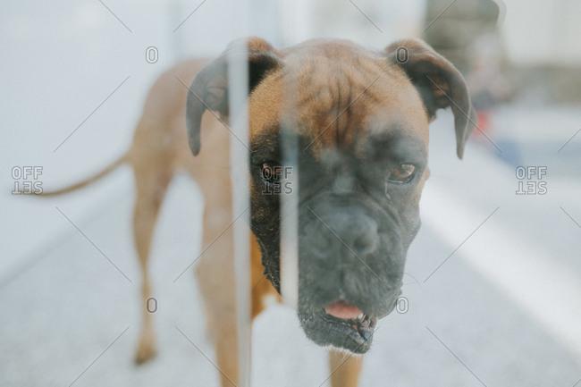Dog looking through window