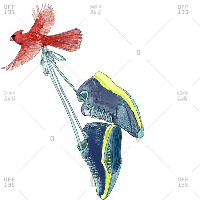 Cardinal bird carrying pair of shoes