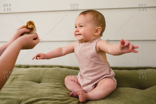 Excited baby looking at a young chick