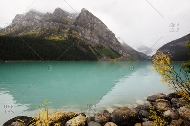 Yellow fall foliage against blue water of Lake Louise in Banff National Park