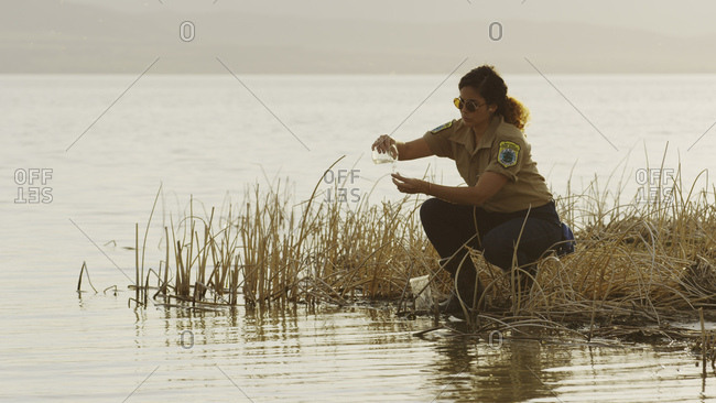 Profile of scientist examining water sample in reeds at remote grassy lake shore