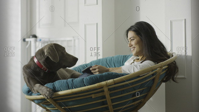 Low angle view of pet dog and woman using smartphone and sitting in chair