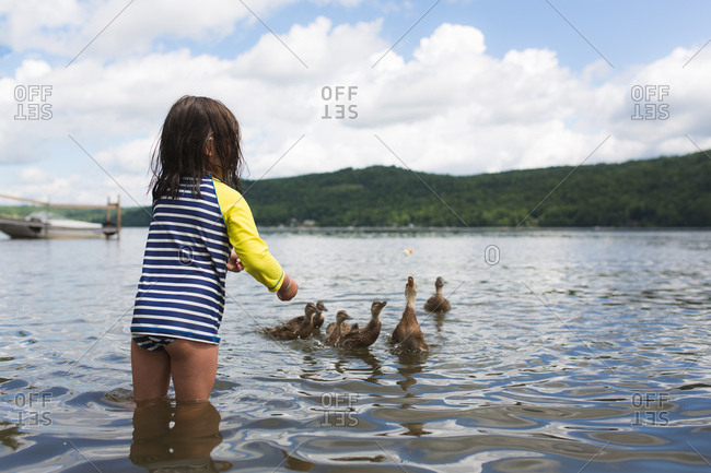 Young girl standing in lake to feed ducks