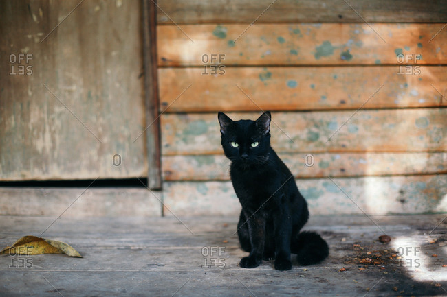 Black cat on a porch in Thailand