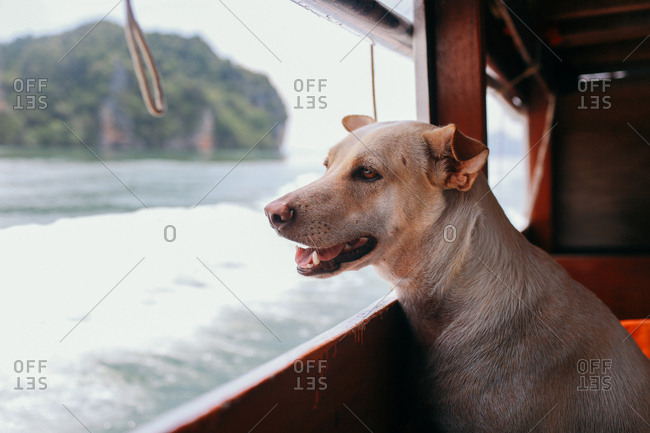 Dog riding a boat in Thailand
