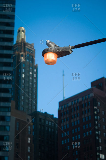 Chicago, Illinois, USA - April 2, 2011: Bird on a lamppost in downtown Chicago
