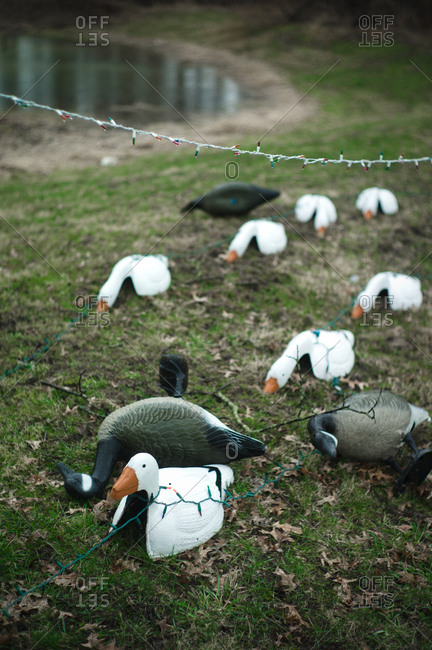 Christmas lights and fake ducks on a lawn