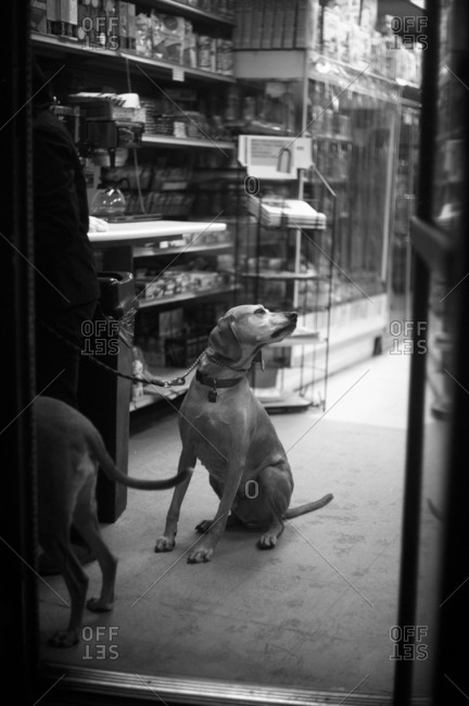 Dogs inside a New York City cigar shop