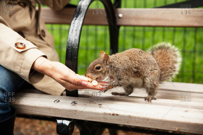 Woman feeding squirrel a snack on a bench in Gramercy Park in New York City