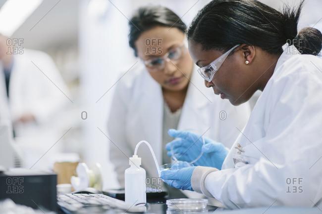 Female doctors examining petri dish in laboratory