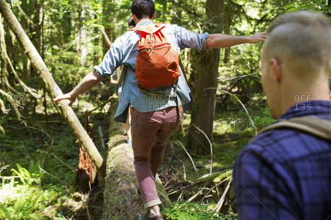 Hikers walking on log in forest