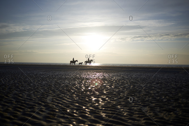 Mid distance view of silhouette people horseback riding at sandbar against sky during sunset