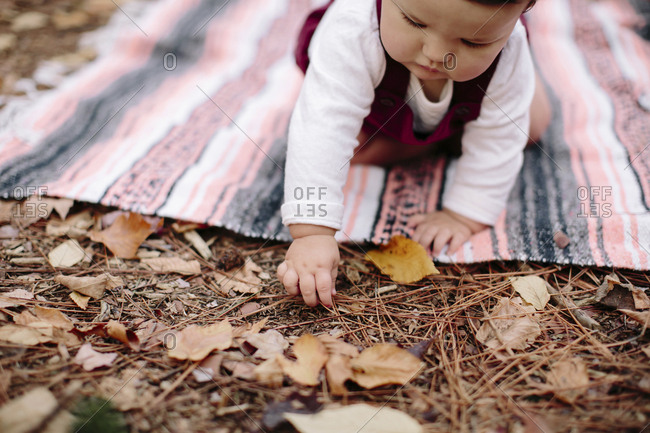 Baby girl picking dry leaves while sitting on blanket in forest