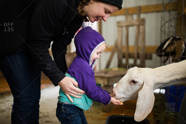 Toddler and girl feeding a goat