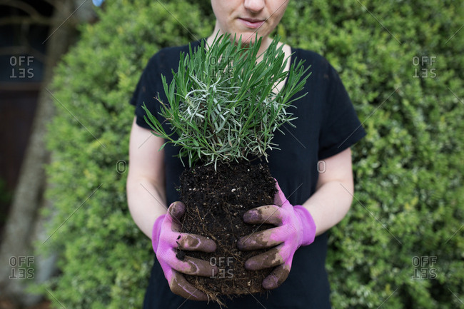 Boy holding plant for landscaping