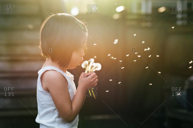 Dandelion seeds drifting from little girl's breath