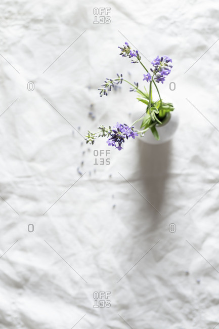Fresh Lavender in white vase