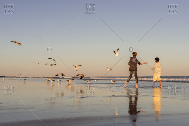 Boys throwing food to seagulls on a beach