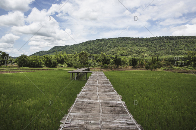 Elevated walkway through rice field in Thailand