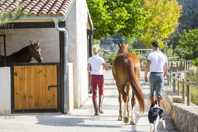 Rear view of male and female grooms leading horse in rural stables