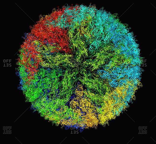 Zika virus virion capsid molecular model