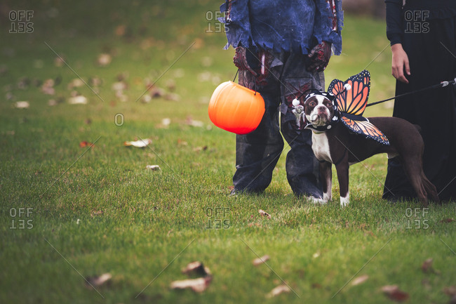 Friends in Halloween costumes with dog dressed as butterfly