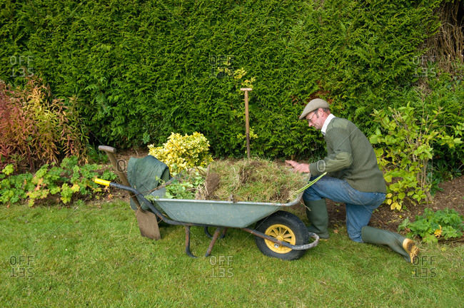 Mature man kneeling by wheelbarrow gardening
