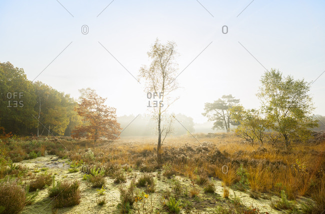 Nature reserve in the south of Holland, autumn morning, Noord-Brabant, Netherlands