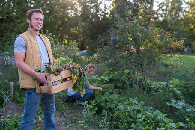 Woman picking crops on farm, man holding crate of crops