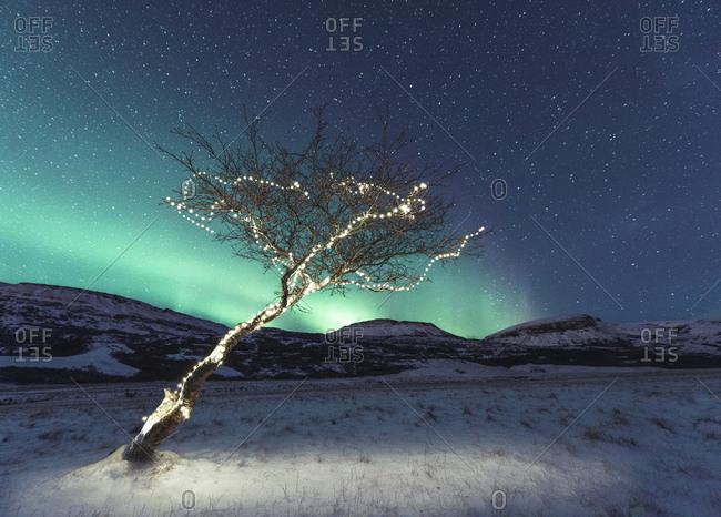 Tree with lights, Aurora Borealis in background, Hvalfjordur, Iceland