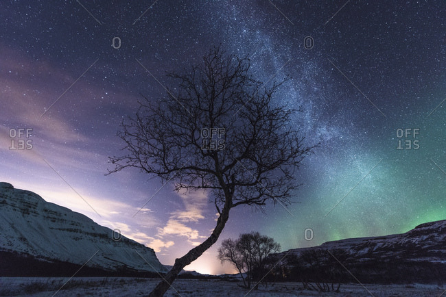 Tree, Aurora Borealis in background, Hvalfjordur, Iceland