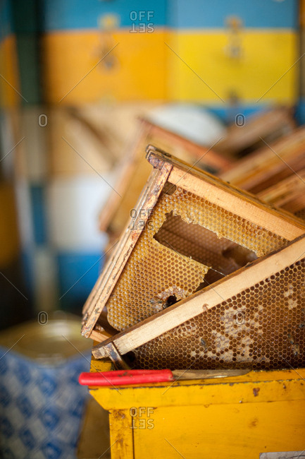 Frames of honeycomb from beehive