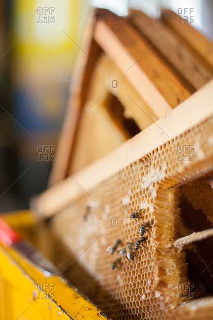 Close-up of bees on frames of honeycomb