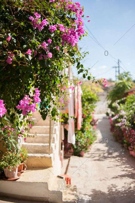 Flowering plants in line a quaint residential street in Fiskardo, Kefalonia, Greece
