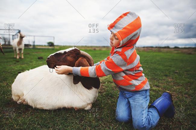 Boy kneeling next to a goat feeding it a piece of grass