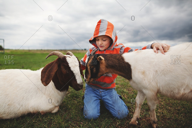 Boy kneeling between two goats in a barnyard petting them