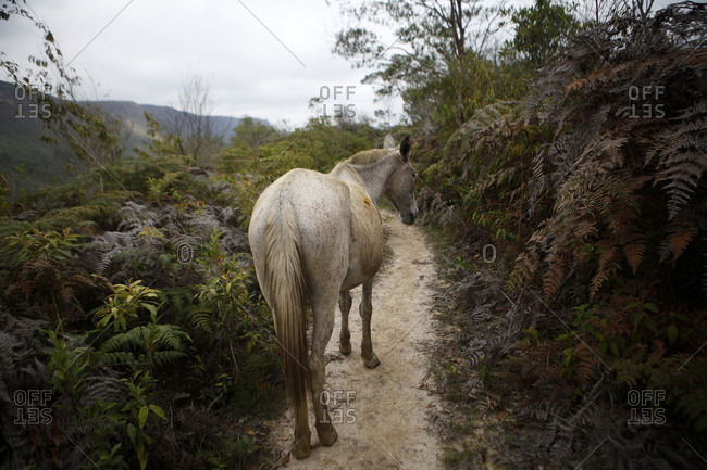Horse standing on a dirt path on a mountainside