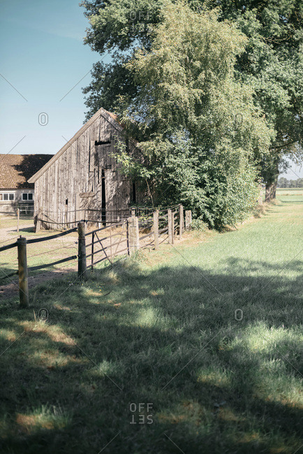 Old decayed wooden barn under summer trees.