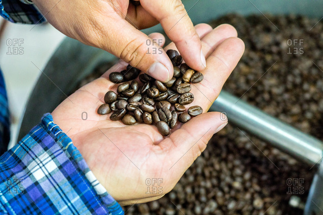 Inspecting roasted coffee beans