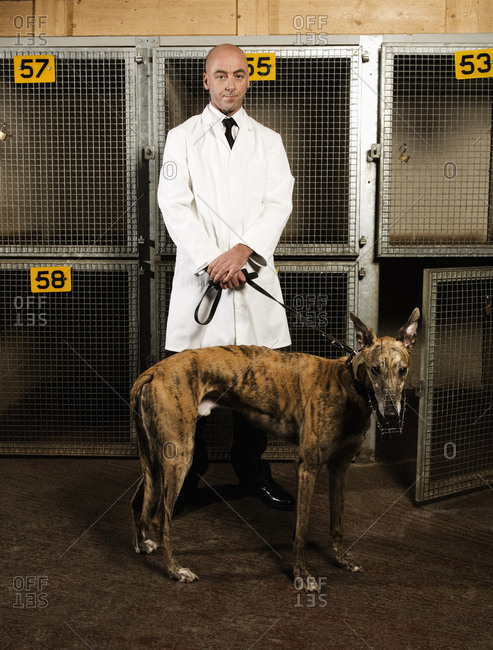 Dog handler standing in front of a cages in a greyhound track kennel, holding a brindle dog on a lead.
