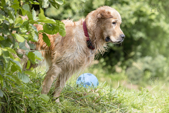 Wet dog standing on meadow