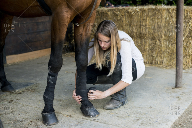 Young woman applying bandage to horse\'s leg