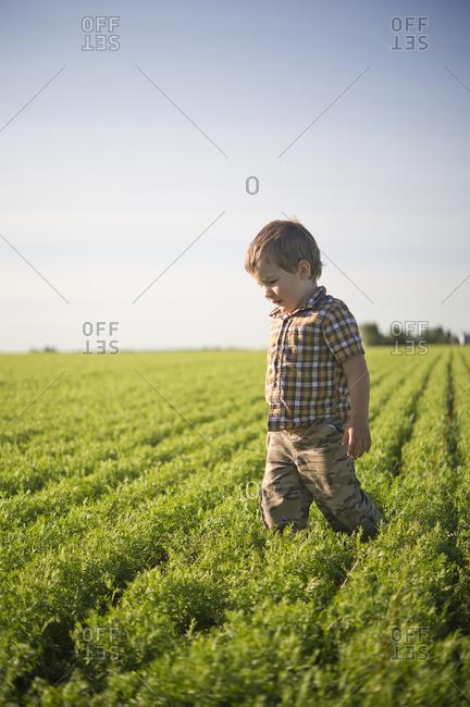 Young boy standing in a farm field in summertime, Saskatchewan, Canada